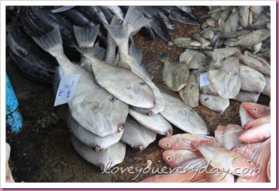 ปลาแรด ระนอง