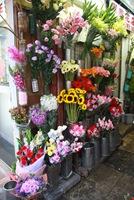 ดอกไม้ มากมายหลายสี